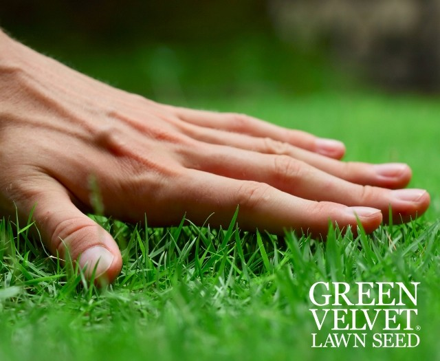 Barenbrug Appoints Agencies To Support Green Velvet Lawn Seed
