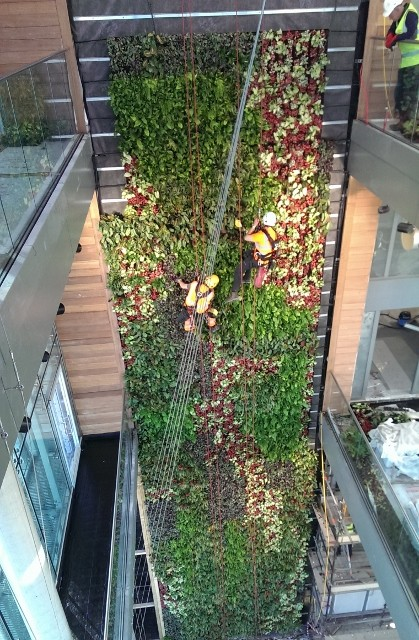Ans Global Installs Europe'S Tallest Indoor Living Wall