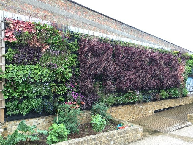 Pupils Impressed By New Living Wall At Phoenix School